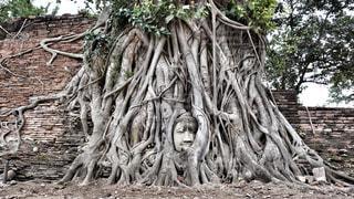 木に埋もれた首の写真・画像素材[1022240]