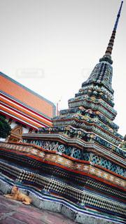 タイのネコの写真・画像素材[1022265]