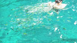 群がる熱帯魚の写真・画像素材[1022274]