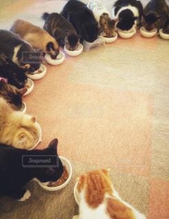 ネコの食事の写真・画像素材[1031970]