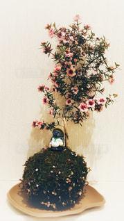 苔玉のタヌキの写真・画像素材[1140176]