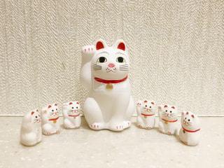 猫の写真・画像素材[1248119]