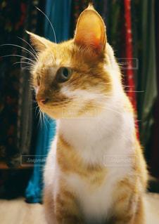 イスタンブールのネコの写真・画像素材[1361605]