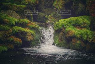 苔と水の写真・画像素材[1380701]