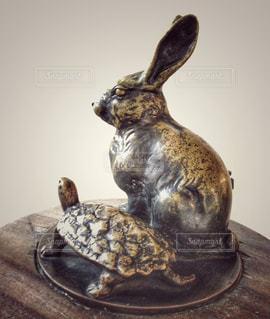 ウサギとカメの写真・画像素材[1395250]