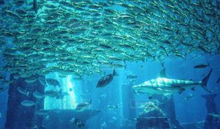 ドバイの水族館の写真・画像素材[1403442]