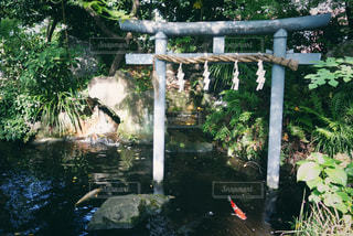 愛宕神社鳥居の写真・画像素材[1403453]