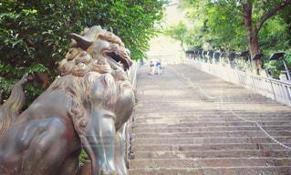 出世の階段の写真・画像素材[1403455]