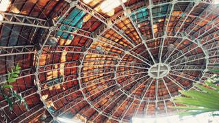 草津熱帯ドームの天井の写真・画像素材[1456789]