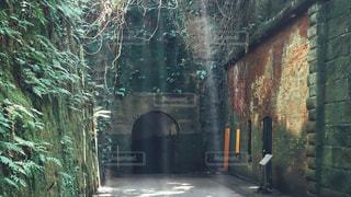 猿島の木漏れ日の写真・画像素材[1465560]