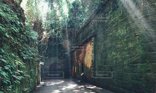 猿島の木漏れ日の写真・画像素材[1465562]