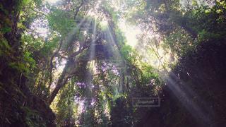 猿島の木漏れ日の写真・画像素材[1465563]