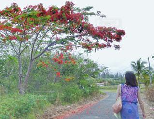 ニューカレドニアを散歩の写真・画像素材[1504638]