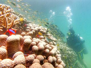 ニューカレドニアの海の写真・画像素材[1504640]