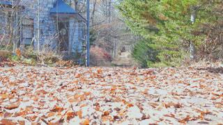 落ち葉の道の写真・画像素材[1650218]