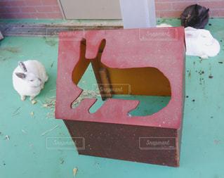 ウサギ小屋の写真・画像素材[1650246]