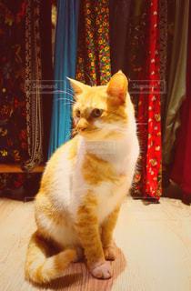 トルコのネコの写真・画像素材[1652335]