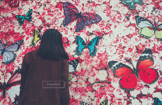 蝶の壁の写真・画像素材[1766656]