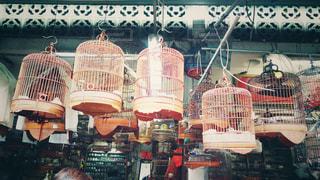 鳥かごの写真・画像素材[1766712]
