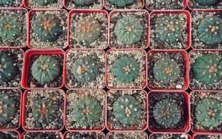 多肉植物の写真・画像素材[1766717]