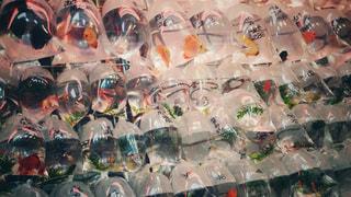 壁一面の魚たちの写真・画像素材[1766773]