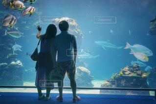 水族館の写真・画像素材[1787671]