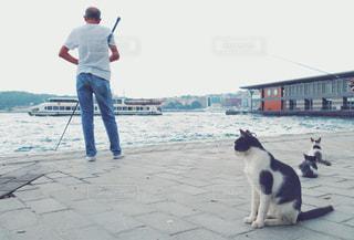 イスタンブールの猫たちの写真・画像素材[1845439]