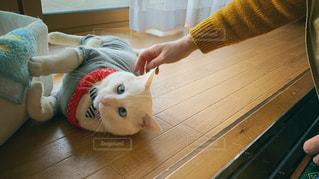 ネコの写真・画像素材[2111298]