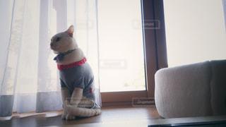 縁側のネコの写真・画像素材[2111300]