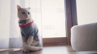 縁側のネコの写真・画像素材[2111302]