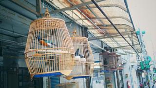 台湾鳥街の写真・画像素材[2238332]