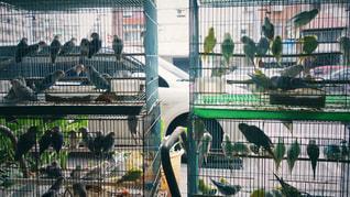台湾鳥街の写真・画像素材[2238337]