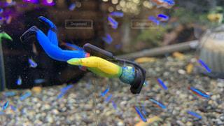 熱帯魚の海の写真・画像素材[2238596]