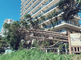 台風一過の写真・画像素材[2603499]