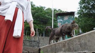 男木島のネコの写真・画像素材[2603642]