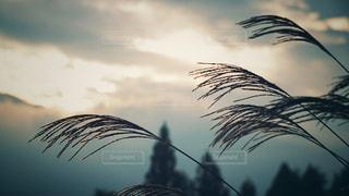 秋の夕暮れの写真・画像素材[2766567]