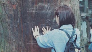 ご神木の写真・画像素材[2766570]