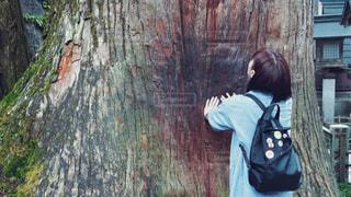 ご神木の写真・画像素材[2766571]