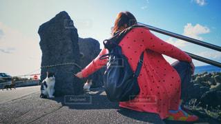 八丈島の猫の写真・画像素材[2766668]
