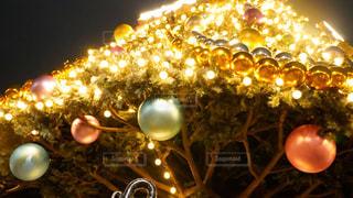 クリスマスツリーの写真・画像素材[2818262]