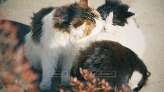 猫2匹の写真・画像素材[2863905]