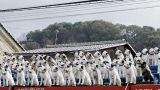 倉敷にある貯金箱博物館の屋根に並ぶ犬たちの写真・画像素材[3132477]