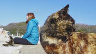 猫がたくさん真鍋島の写真・画像素材[3132828]