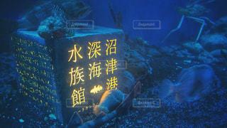 沼津港深海水族館の写真・画像素材[3165356]