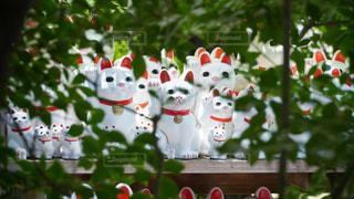 豪徳寺の招き猫の写真・画像素材[3493897]