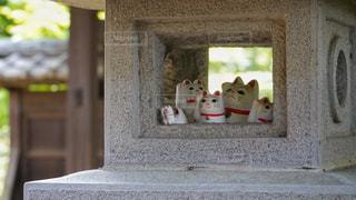 豪徳寺の招き猫の写真・画像素材[3493898]