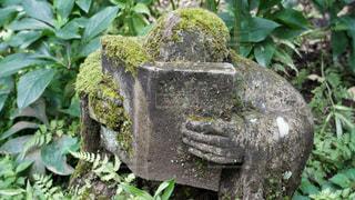 柿生の浄慶寺にての写真・画像素材[3512537]