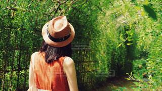 緑のアーチの写真・画像素材[3548698]