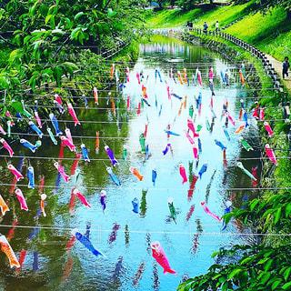 色とりどりの鯉のぼりの写真・画像素材[2844125]