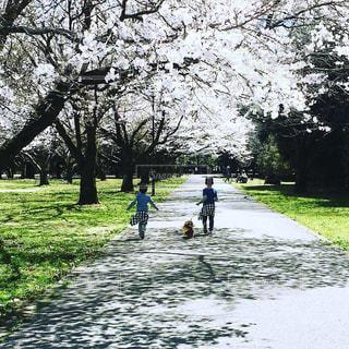 散歩の写真・画像素材[2874101]